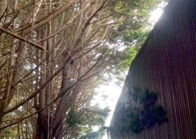 Tree-Surgery-96