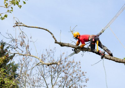 Tree Surgeon Working