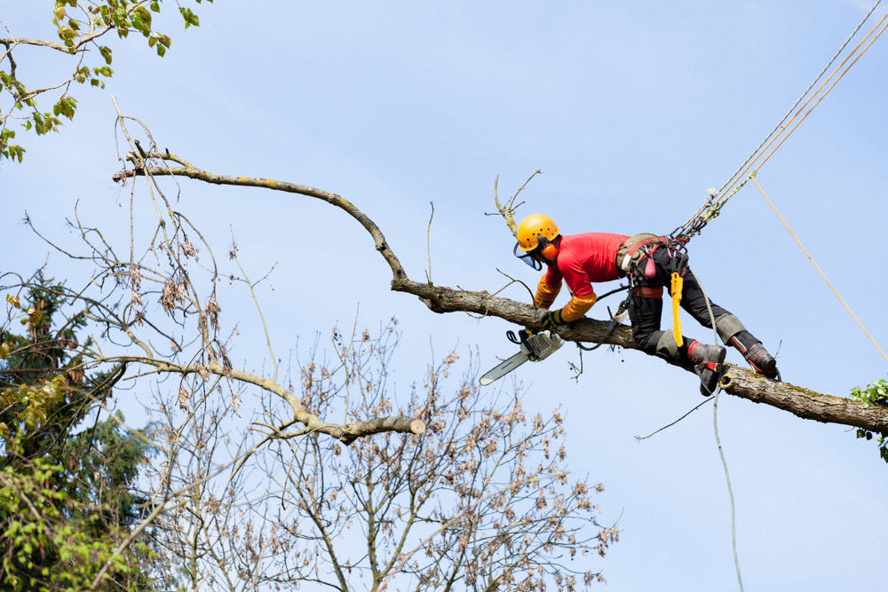 expert tree surgery by qualified tree surgeons. Black Bedroom Furniture Sets. Home Design Ideas