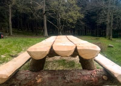 Tree-Surgery-169