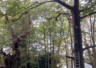 Tree-Surgery-88